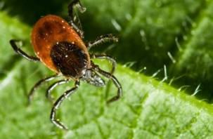 Смолян предупреждают: обнаружено новое заболевание, передающееся при укусах клещей
