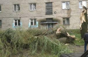 Деревья всё падали и падали: смоляне публикуют «стихийные фото» в соцсетях