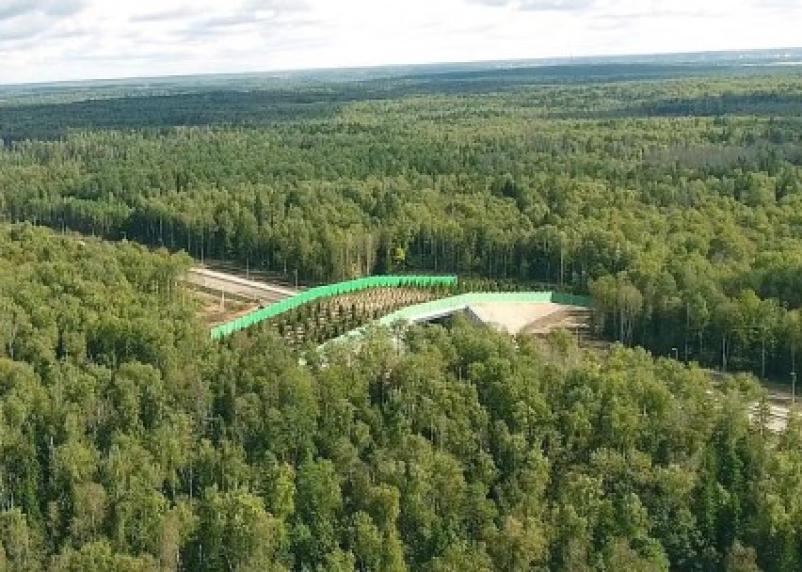 В Смоленской области на трассе Москва-Минск построят три «звериных перехода»