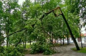 В результате грозы в Смоленске на Блонье рухнули деревья