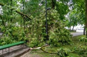 В Смоленской области объявили второе штормовое