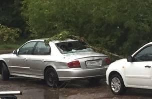 В Смоленске упавшее дерево разбило стекло в машине