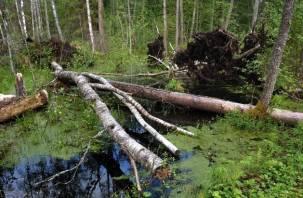 Пропавший в лесу глухонемой смолянин застрял в болоте