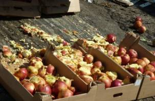 В смоленскую землю закопали тонны яблок и голубики