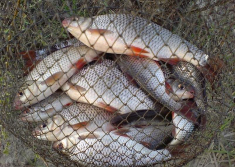 В Смоленской области задержали рыбака-браконьера