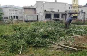 Зачем в Смоленске вырубили березовую рощу в переулке Юннатов?