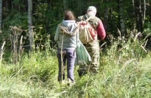 В Смоленской области супруги-грибники заблудились в лесу