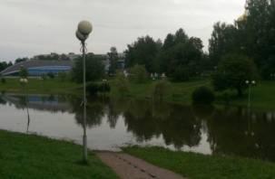 Когда парк 1100-летия Смоленска приведут в порядок?