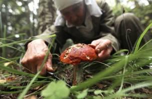 Смоленскую пенсионерку второй день не могут найти в лесу