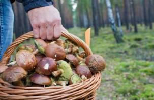 В Ельнинском районе пропал грибник
