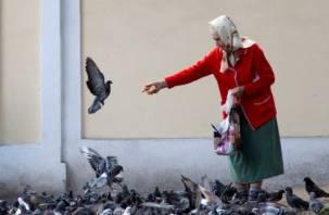 Смолян просят перестать кормить голубей