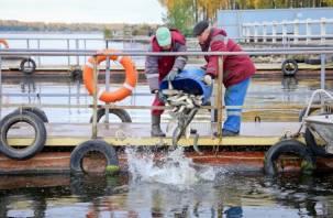 Более 50 центнеров рыбы будет выпущено в Десногорское водохранилище