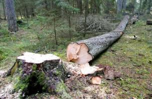Смоленский предприниматель может лишиться свободы за спиленное дерево