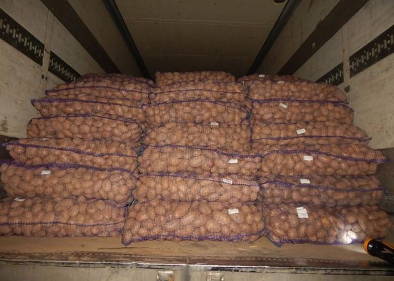 Россия вновь сократила поставки картофеля из Беларуси