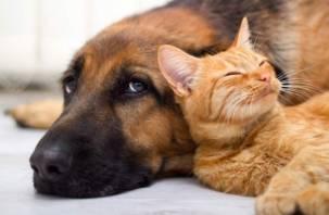 Смоляне будут платить за кошек и собак