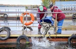 В водохранилище Смоленской АЭС запускают растительноядную рыбу