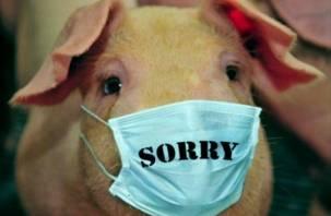 Смолян предупреждают об эпидемии свиного гриппа