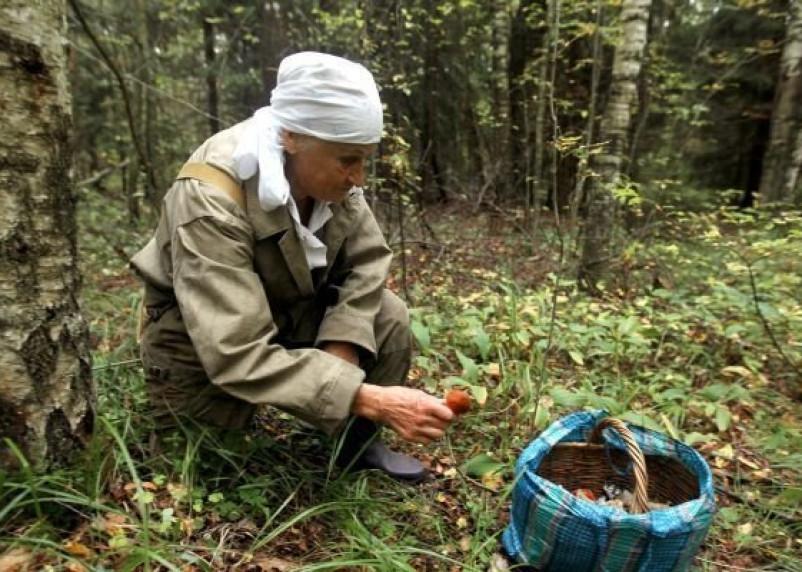 Смоленская пенсионерка сама спаслась от гибели в лесу