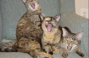 В Смоленске кошки спасли людей от гибели