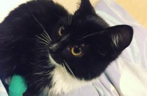 В Смоленске ищут «семью» котенку, жестоко выброшенному на трассе