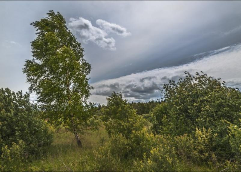На Смоленскую область надвигается штормовой ветер