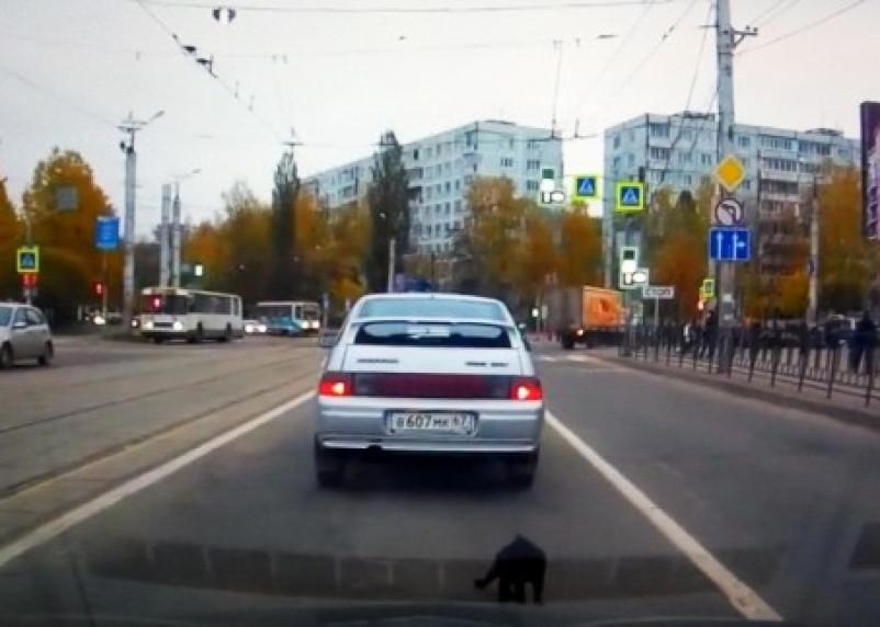 В Смоленске выбросили котенка из авто прямо на проезжей части: в Сети появилось видео