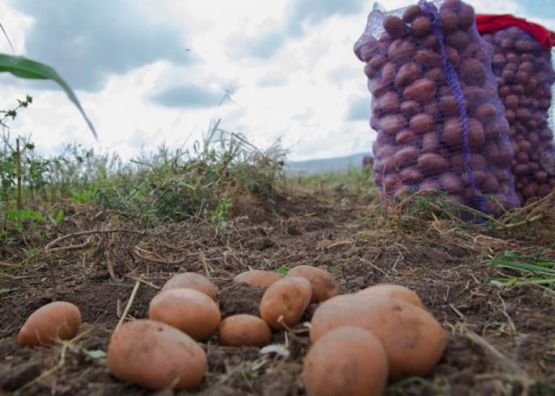 Смоленские аграрии собрали больше урожая, чем в прошлом году