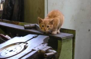 В Смоленской области мертвый кот положил конец обедам на рабочем месте