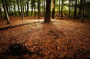 Пожилая смолянка потерялась в лесу Велижского района