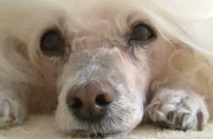 Смоляне обсуждают поступок «непростой дамы», которая сбила во дворе собаку