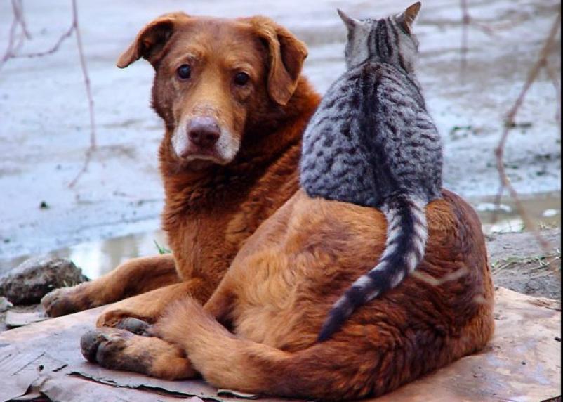Смолян приглашают на акцию помощи бездомным животным