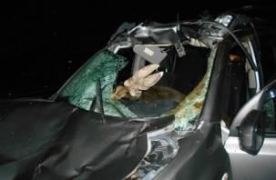 На трассе М-1 в Смоленской области пострадал водитель при столкновениис лосем