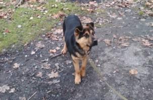 В Смоленске собаку на поводке привязали к дереву и оставили погибать
