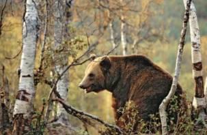 Смоленского охотника в лесу покалечил разъяренный медведь