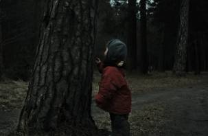 В смоленском лесу потерялись дети