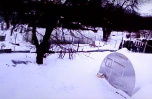 «Сейчас меня покормят»: в Смоленске лисичка попала на видео