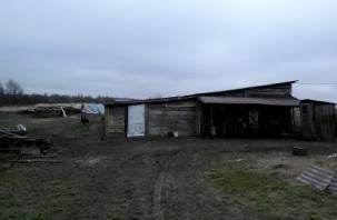 Смоленскую свиноферму закрыли из-за грубых нарушений