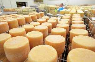 На смоленских прилавках может продаваться сыр из молока с антибиотиками
