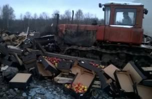 Под Смоленском уничтожили 19 тонн яблок