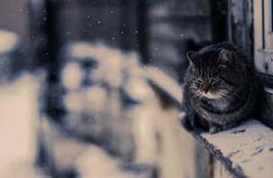 Не по прихоти. В РФ предложили запретить удалять когти у кошек
