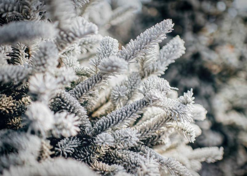 18 января температура воздуха на Смоленщине опустится до -28°C