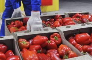 Под Смоленском уничтожены тонны овощей