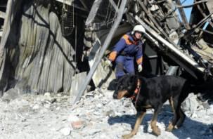 В смоленском приюте для животных заживо сгорел пес «Волк»