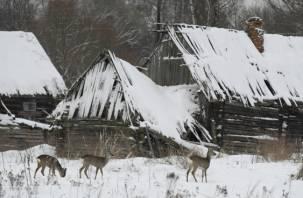 Дикие животные обживают заброшенные смоленские деревни