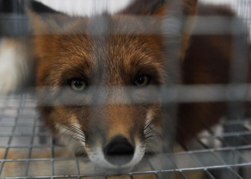 Стало известно, в каких районах Смоленщины больше всего бешеных животных