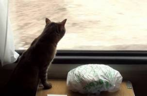 Смоляне могут купить билет на поезд для кошек и собак не выходя из дома
