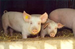 В Смоленской области выросло производство мяса