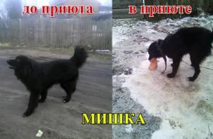«Собак нужно срочно спасать!». Смоляне сообщают о приюте для животных, который превратили в концлагерь