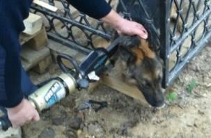 В Смоленском районе собака застряла в отверстии металлического забора