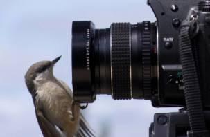 Соревнования по зимнему фотографированию птиц состоялись в Смоленске